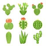 Vektorikonensatz des farbigen Kaktus und des Succulent Lizenzfreies Stockbild