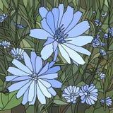 Vektorillustration av blommachicoryen (Succory). Fotografering för Bildbyråer