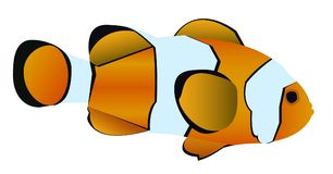 Vektorillustration av clownfish Royaltyfria Bilder