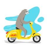 Vektorillustration av den lyckliga gulliga sengångareridningen på sparkcykeln Royaltyfri Bild