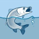 Vektorillustration av den rovdjurs- fisken som hoppar från vattnet Royaltyfri Foto
