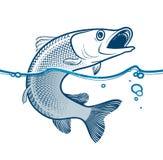 Vektorillustration av den rovdjurs- fisken som hoppar från vattnet Arkivfoton
