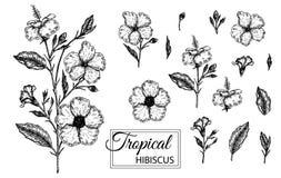 Vektorillustration av den tropiska blomman som isoleras p? vit bakgrund vektor illustrationer