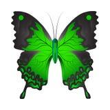 Vektorillustration av en grön fjäril stock illustrationer
