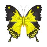 Vektorillustration av en gul fjäril vektor illustrationer