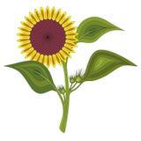 Vektorillustration av en solros på en vit bakgrund stock illustrationer