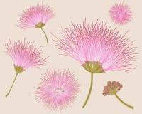 Vektorillustration av exotiska rosa blommor Arkivfoton