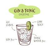 Vektorillustration av gin- och uppiggningsmedelcoctailreceptet med proportioner av ingredienser vektor illustrationer