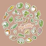 Vektorillustration av grönsaken med ett ställe för text stock illustrationer