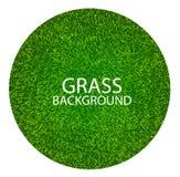 Vektorillustration av grönt gräs Royaltyfri Bild