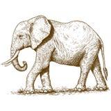 Vektorillustration av gravyrelefanten Fotografering för Bildbyråer