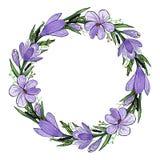 Vektorillustration av krokuskransen med hyacinten och örter Hand-dragen vårram av violetta och gula blommor och gräsplan stock illustrationer