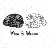 Vektorillustration av man- och kvinnahjärnor Dessa är iconic kritiska anmärkningar av genuspsykologi, kreativitet, idéer Arkivfoton