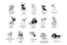 Vektorillustration av olika avel f?r hundkappl?pningvalpar royaltyfri illustrationer