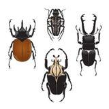 Vektorillustration av skalbaggar Arkivfoton