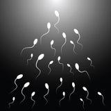 Vektorillustration av spermatozo Royaltyfria Foton