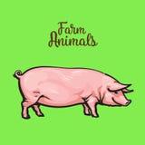 Vektorillustration av svinet i grafisk stil Teckna förbi handen Royaltyfri Fotografi