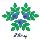 Vektorillustration, blåbär, blåbär, blåa skogbär Royaltyfri Bild