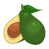 Vektorillustration der Avocado Lizenzfreies Stockfoto