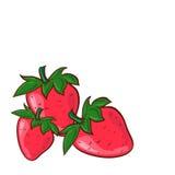 Vektorillustration der Erdbeerevektorillustration kann für Druckerzeugnissegewebe benutzt werden Lizenzfreies Stockfoto