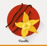 Vektorillustration in der flachen Art Vanillegewürz Lizenzfreies Stockbild