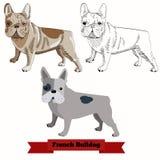 Vektorillustration der französischen Bulldogge Hunde Stockfoto