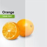 Vektorillustration der frischen Orange Stockfotografie