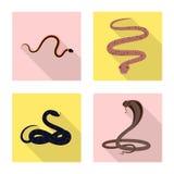 Vektorillustration der Haut- und Reptilikone Stellen Sie von der Haut und Gefahrenvektorillustration von der auf Lager ein vektor abbildung