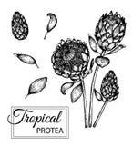 Vektorillustration der tropischen Blume lokalisiert auf wei?em Hintergrund lizenzfreie abbildung