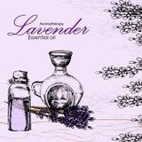 Vektorillustration des ätherischen Öls des Lavendels Stockfotografie