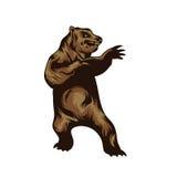 Vektorillustration des Bären Lizenzfreie Stockfotografie