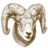 Vektorillustration des Stich-RAM-Kopfes lizenzfreie abbildung