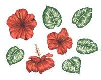 Vektorillustration des tropischen Hibiscus mit monstera Blättern lokalisiert auf weißem Hintergrund stock abbildung