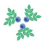 Vektorillustration, efterföljd av broderi blå skogsommar Arkivbilder
