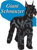 Vektorillustration för jätte- Schnauzer stock illustrationer