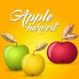 Vektorillustration för tre äpplen Arkivbilder