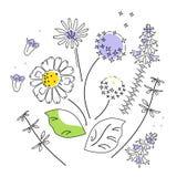 Vektorillustration Feld-Blumen lokalisiert auf weißem Hintergrund stock abbildung