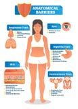 Vektorillustration med anatomisk barriärintrig Människokropp med respiratoriskt, digestivkex, det genitourinary området, ögon och vektor illustrationer