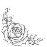 Vektorillustration med en prucken rosblomma och sidor i svart på vit bakgrund Blom- beståndsdelar med öppet steg vektor illustrationer