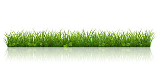 Härligt grönt gräs Arkivbilder