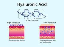 Vektorillustration med Hyaluronic syra i hud-omsorg produkter Lågt - molekylärt och högt - molekylärt Royaltyfria Bilder