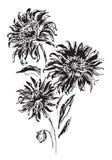 Vektorillustration med svarta blommor Royaltyfri Foto