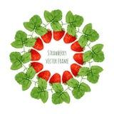 Vektorillustration med vattenfärgjordgubberamen Handen drog bäret för bönder marknadsför, örtte, ecoproduktdesign Royaltyfria Bilder