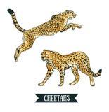 Vektorillustration mit Leoparden/Gepard Springendes Tier lizenzfreie abbildung