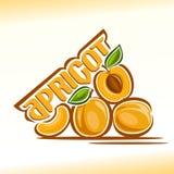 Vektorillustration på temat av aprikons Royaltyfri Fotografi