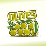 Vektorillustration på temat av oliv Royaltyfri Fotografi