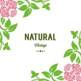 Vektorillustration som märker naturlig tappning för rosa och gröna sidor för dekorramblomma stock illustrationer