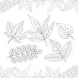Vektorillustration: Uppsättning av hand-drog sidor som isoleras på vit bakgrund Garnering för höstdesign royaltyfri illustrationer