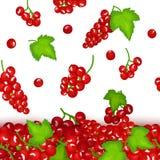 Vektorillustration von fallenden rote Johannisbeerbeeren Vektorkartenillustration Rote Johannisbeerfrucht und Blätter seamlee Lizenzfreie Stockbilder