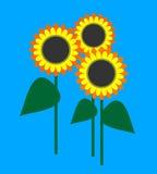 Vektorillustration von Sonnenblumen Lizenzfreie Stockfotografie